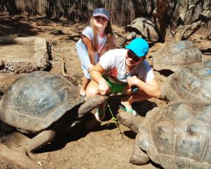 Upoznavanje sa džinovskim kornjačama na Zanzibaru